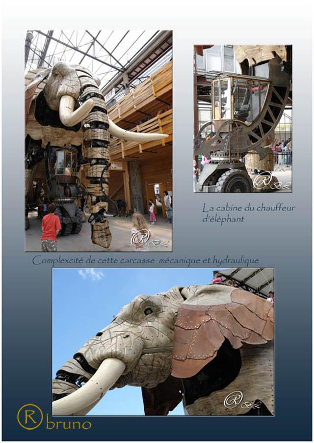 Nantes Elepha14