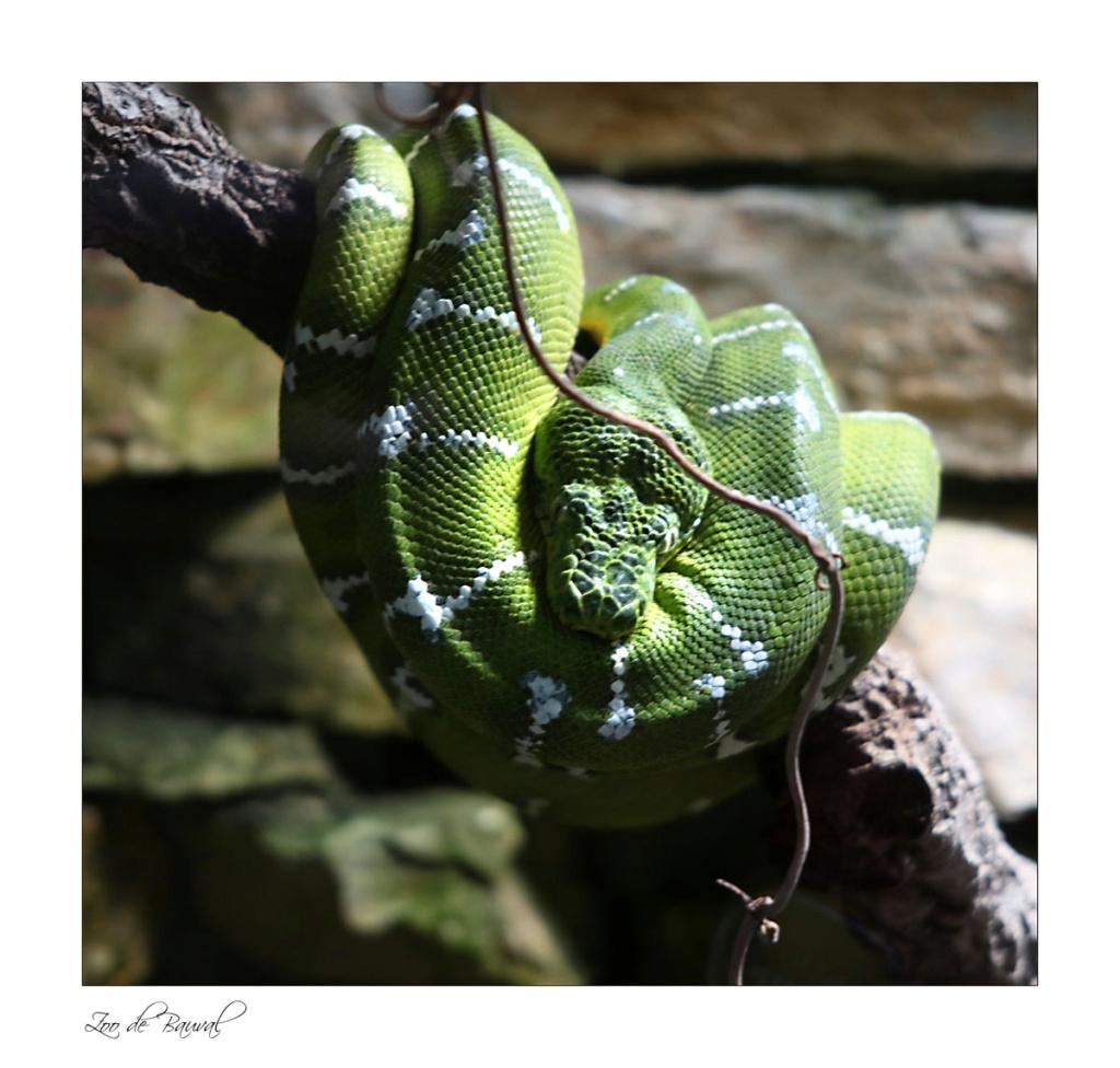 le zoo parc de Beauval Img_0713