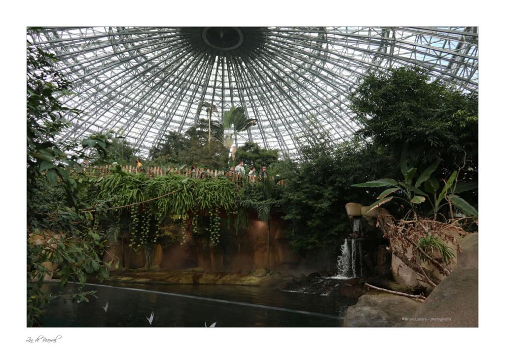 le zoo parc de Beauval Img_0719