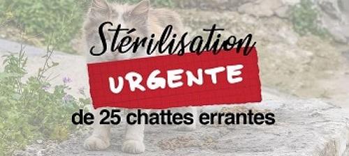 Campagne stérilisation des chats errants - Tunisie 2020 Affic129