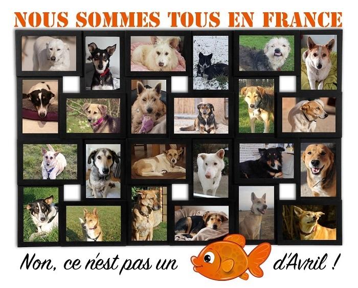 Informations concernant les chiens rescapés de Djerba - Page 2 Affic187