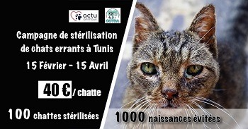 Campagne stérilisation des chats errants - Tunisie 2020 Affich76