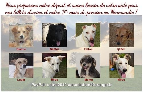 Nouvelles des chiens CCTNA actuellement en Tunisie Affich86