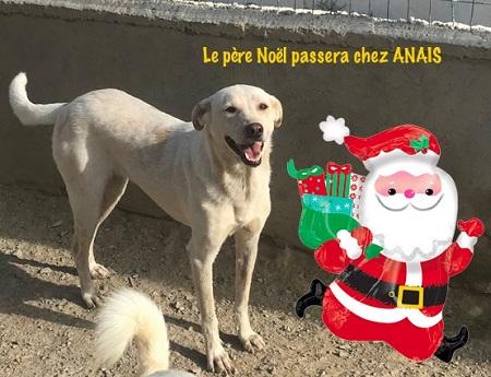 Un panier de Noël pour les chiens du refuge PAT Anais_11