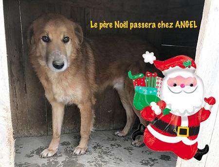 Un panier de Noël pour les chiens du refuge PAT Angel_11