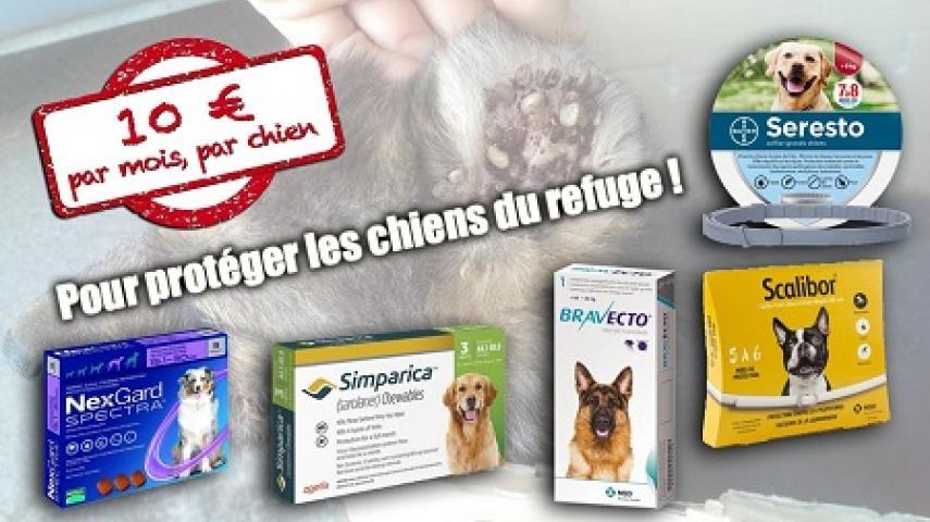 """Campagne """"antiparasitaire"""" pour les chiens du refuge PAT Ape10"""