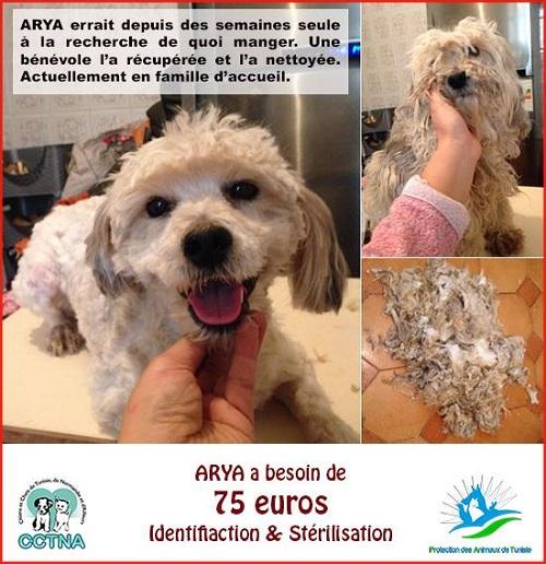 Nouvelles des chiens CCTNA actuellement en Tunisie Arya_p10