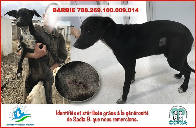 JANVIER 2019 : Aide pour stériliser 6 chiens femelle du refuge de la PAT Barbie11