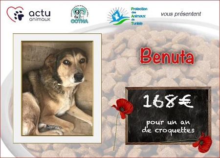 Collecte alimentaire pour les animaux du refuge PAT Benuta12