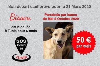 Pandémie COVID19 - Nos protégés bloqués à Tunis - Page 2 Bissou16