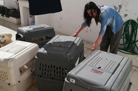 Pandémie COVID19 - Nos protégés bloqués à Tunis Cages_11