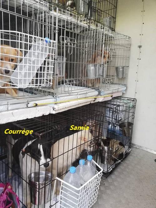 Rapatriement 30 chiens de Bulgarie du 7 & 8 décember 2018 Camion10