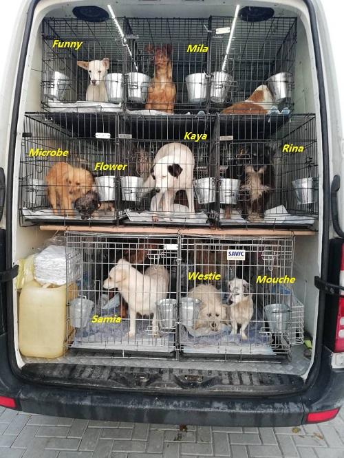 Rapatriement 30 chiens de Bulgarie du 7 & 8 décember 2018 Camion11