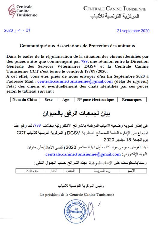 Informations concernant les chiens rescapés de Djerba Centra10