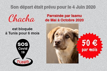 Pandémie COVID19 - Nos protégés bloqués à Tunis - Page 2 Chacha23