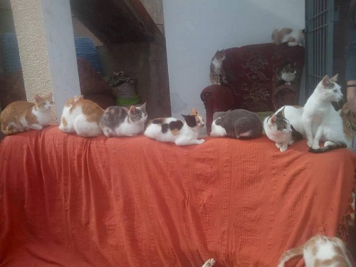 Aide CCTNA pour les animaux de HOUDA Chas_h10
