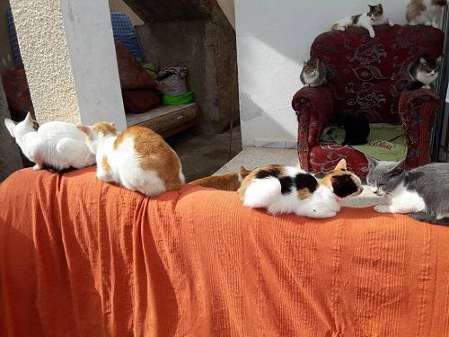 Aide CCTNA pour les animaux de HOUDA Chats_20