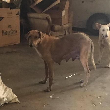 Les chiens de l'Usine de DEN-DEN Chienn11