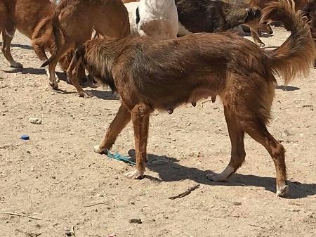 Les chiens de l'Usine de DEN-DEN Chienn20