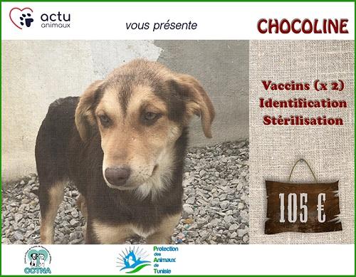 CHOCOLINE, identifiée 941.000.023.236.590, en refuge à Tunis Chocol14
