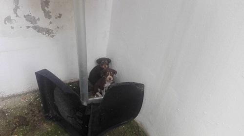 CHOCOLINE, identifiée 941.000.023.236.590, en refuge à Tunis Chocol17