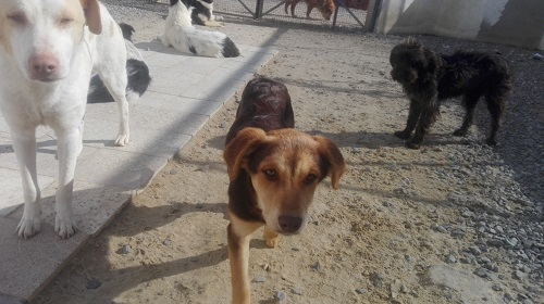 CHOCOLINE, identifiée 941.000.023.236.590, en refuge à Tunis Chocol24
