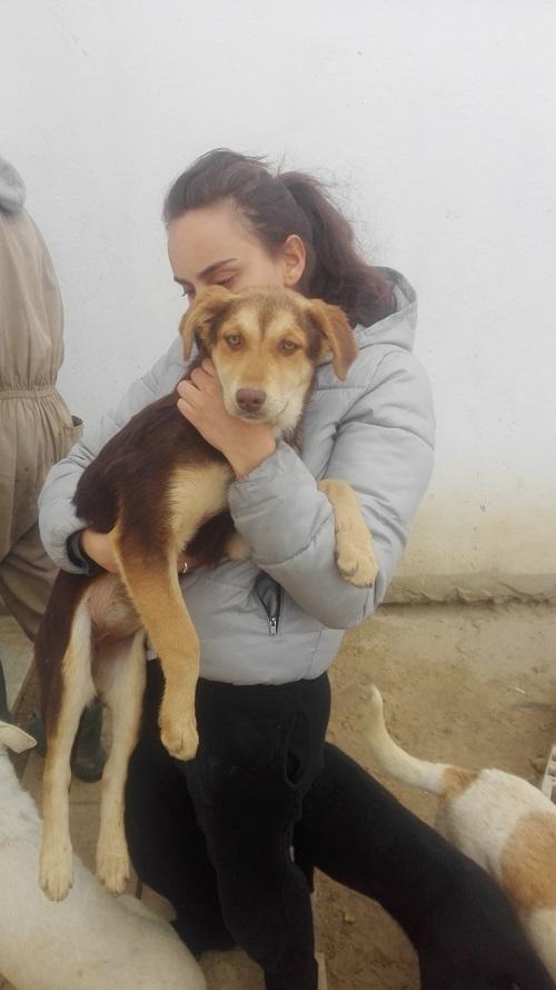 CHOCOLINE, identifiée 941.000.023.236.590, en refuge à Tunis Chocol25