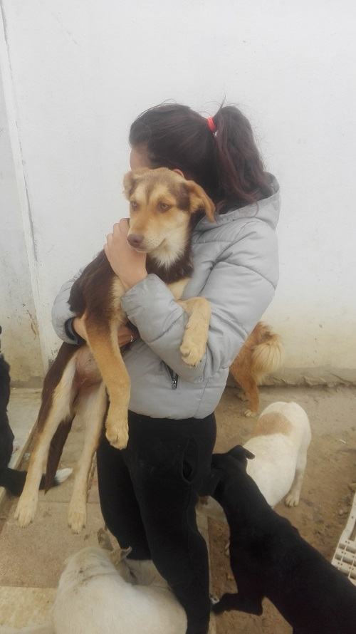 CHOCOLINE, identifiée 941.000.023.236.590, en refuge à Tunis Chocol26