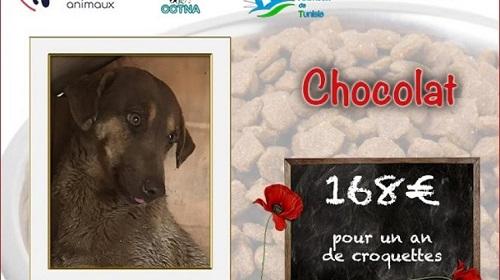 Collecte alimentaire pour les animaux du refuge PAT Chocol46