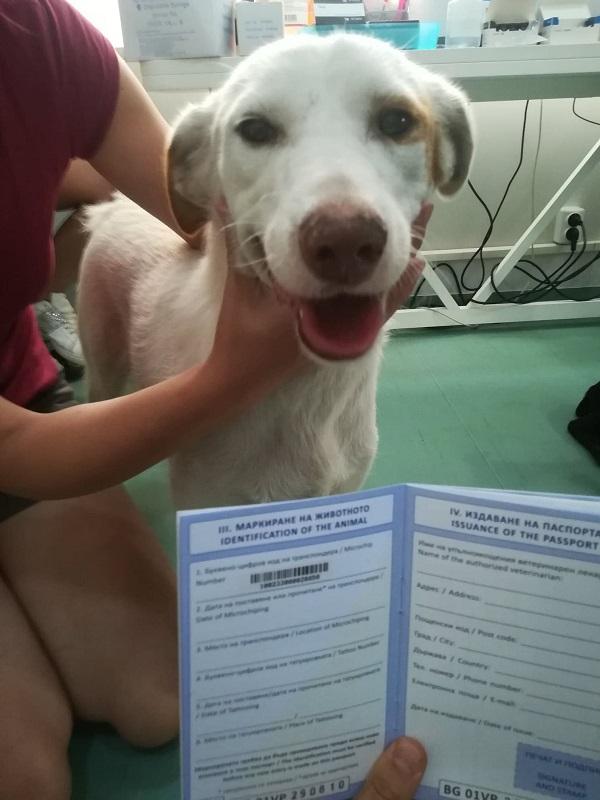 Rapatriement 30 chiens de Bulgarie - 29 ou 30 août 2018 Cn_bg_10