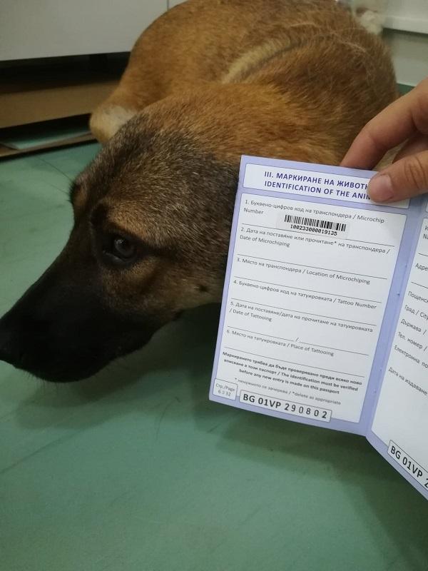 Rapatriement 30 chiens de Bulgarie - 29 ou 30 août 2018 Cn_bg_12