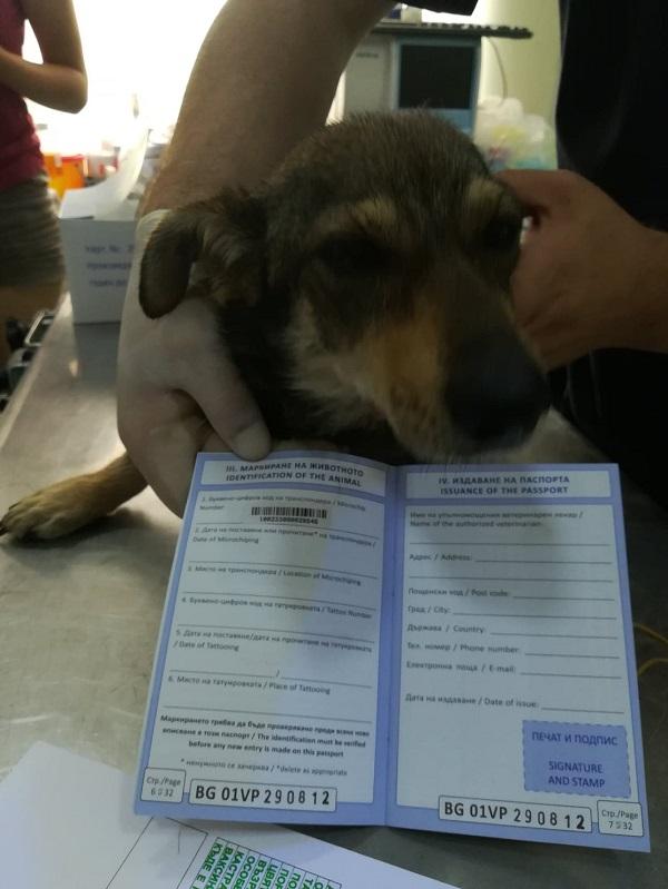 Rapatriement 30 chiens de Bulgarie - 29 ou 30 août 2018 Cn_bg_15