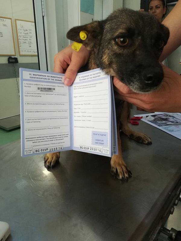 Rapatriement 30 chiens de Bulgarie - 29 ou 30 août 2018 Cn_bg_17
