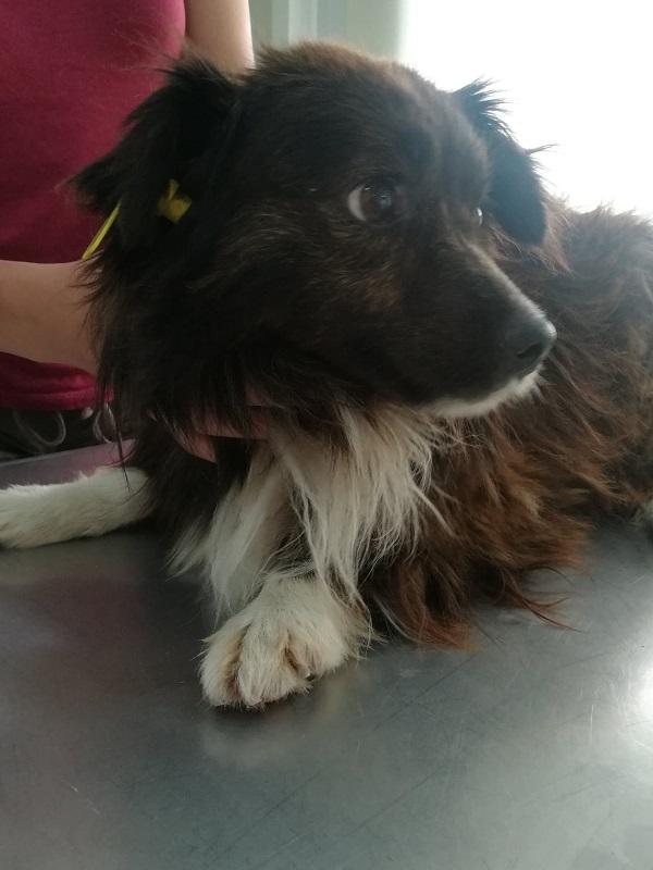 Rapatriement 30 chiens de Bulgarie - 29 ou 30 août 2018 Cn_bg_20