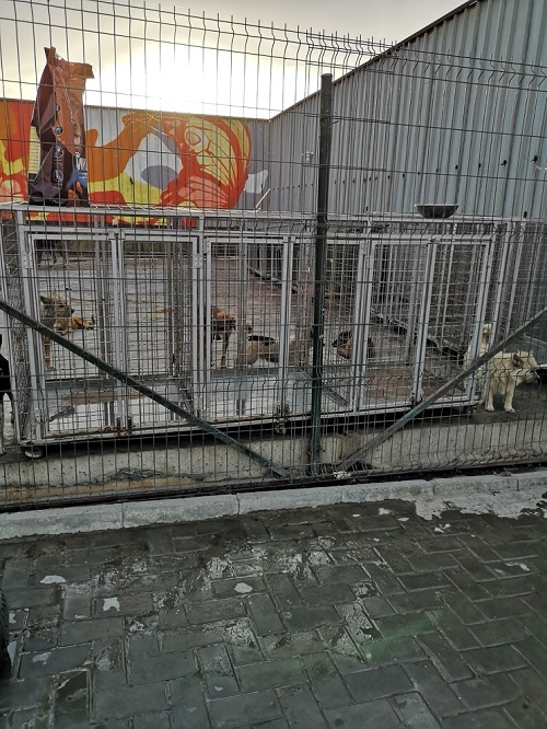 Stérilisation des animaux errants à DEVNYA - Octobre 2018 Cn_lhf16