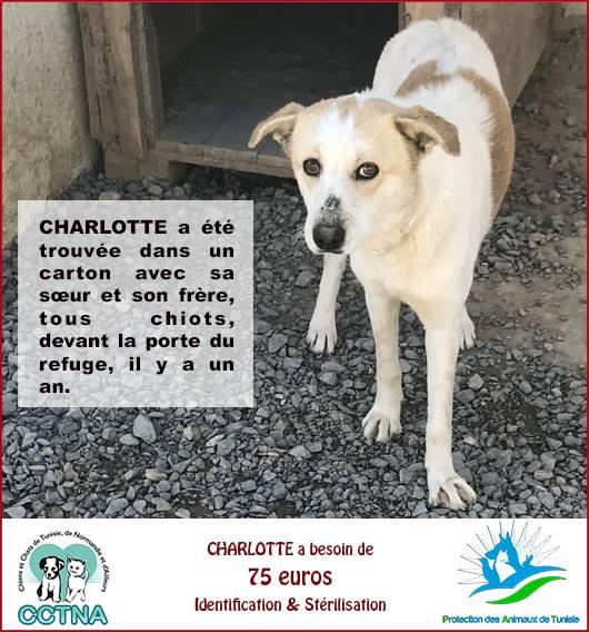 MARS 2019 : aide pour stériliser 8 chiens du refuge PAT Tunis Cn_pat10