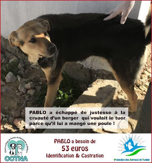 MARS 2019 : aide pour stériliser 8 chiens du refuge PAT Tunis Cn_pat11