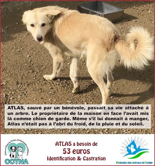 MARS 2019 : aide pour stériliser 8 chiens du refuge PAT Tunis Cn_pat12
