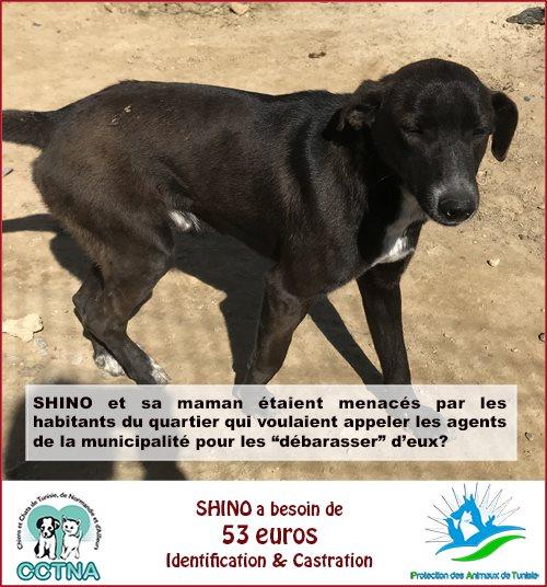 MARS 2019 : aide pour stériliser 8 chiens du refuge PAT Tunis Cn_pat13