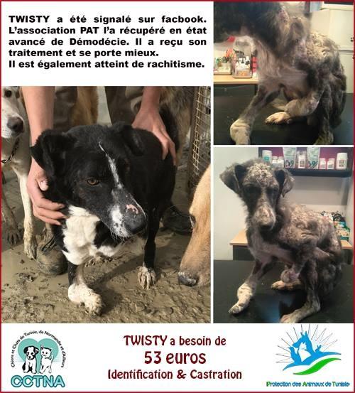MARS 2019 : aide pour stériliser 8 chiens du refuge PAT Tunis Cn_pat14
