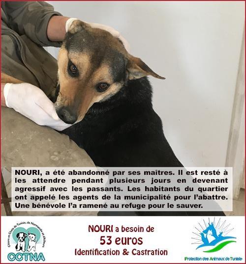 MARS 2019 : aide pour stériliser 8 chiens du refuge PAT Tunis Cn_pat17
