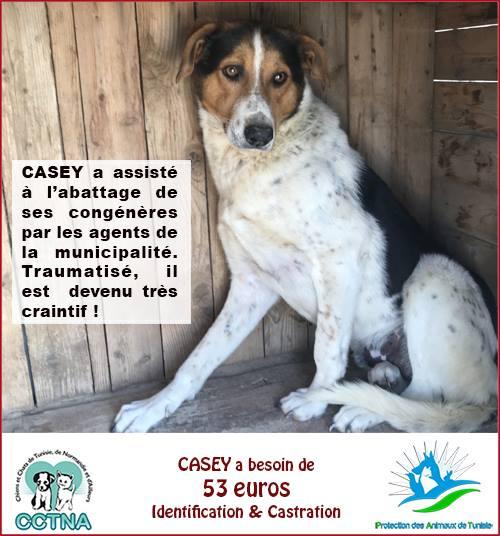 MARS 2019 : aide pour stériliser 8 chiens du refuge PAT Tunis Cn_pat19