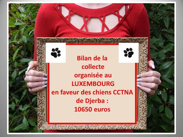 Aides du Luxembourg en faveur des chiens CCTNA de Djerba Collec11
