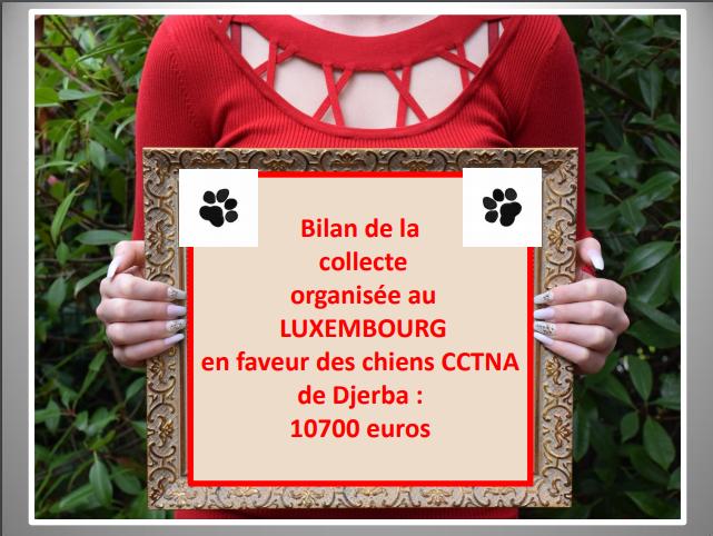 Aides du Luxembourg en faveur des chiens CCTNA de Djerba Collec14