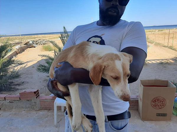 BAMBI (ex-CREMINO), identifié 788.269.100.004.845, jeune mâle - sable et blanc Cremin10