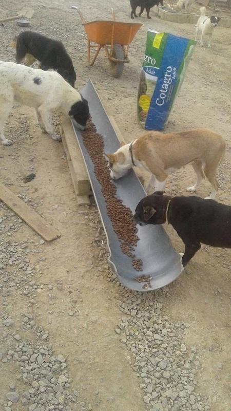 Aide CCTNA pour les animaux du refuge de la PAT Croque15