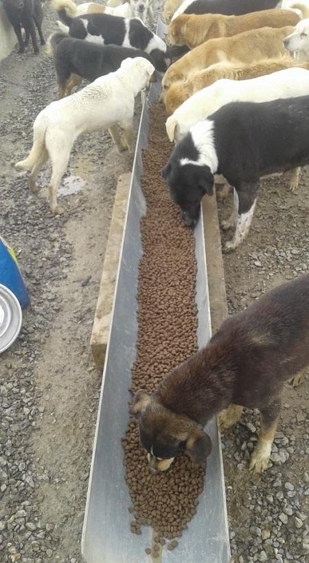 Aide CCTNA pour les animaux du refuge de la PAT Croque19