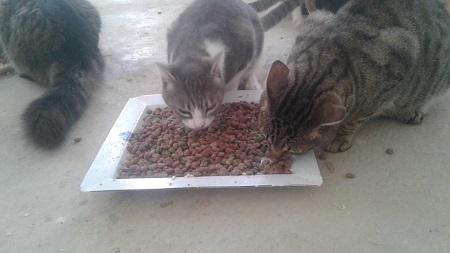 Aide CCTNA pour les animaux du refuge de la PAT Croque20