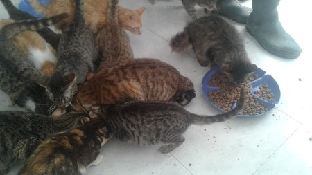 Aide CCTNA pour les animaux du refuge de la PAT Croque23