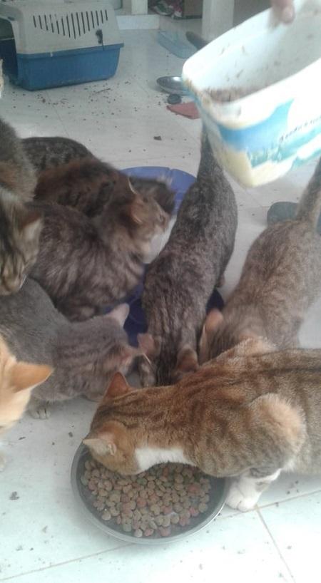 Aide CCTNA pour les animaux du refuge de la PAT Croque25